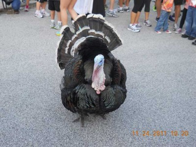 Last Year's Turkey Trot Photos Posted